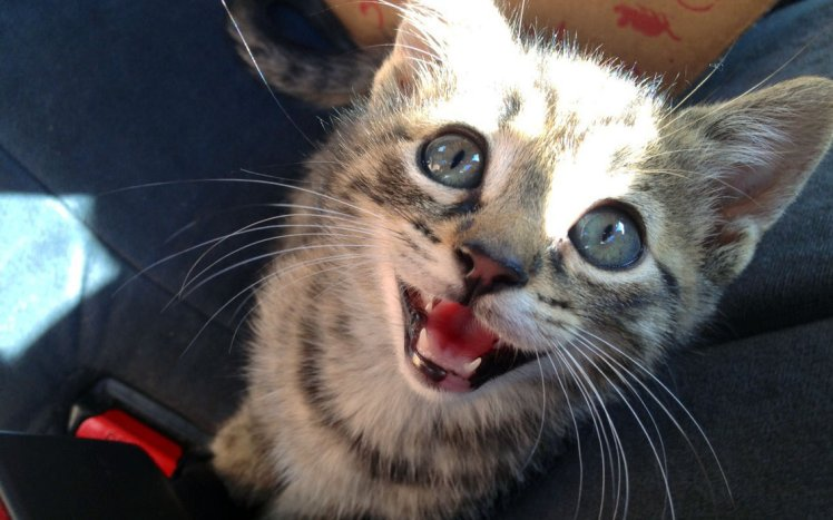 adopting_mica_the_happy_kitten_by_epiccatface-d5d3ub6.jpg